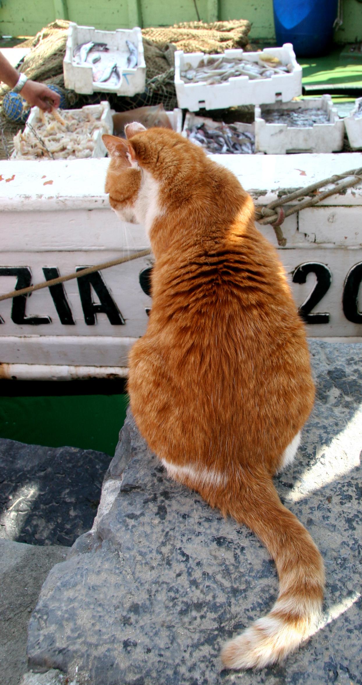 MV #3.3 -  Cinque Terre 175.jpg