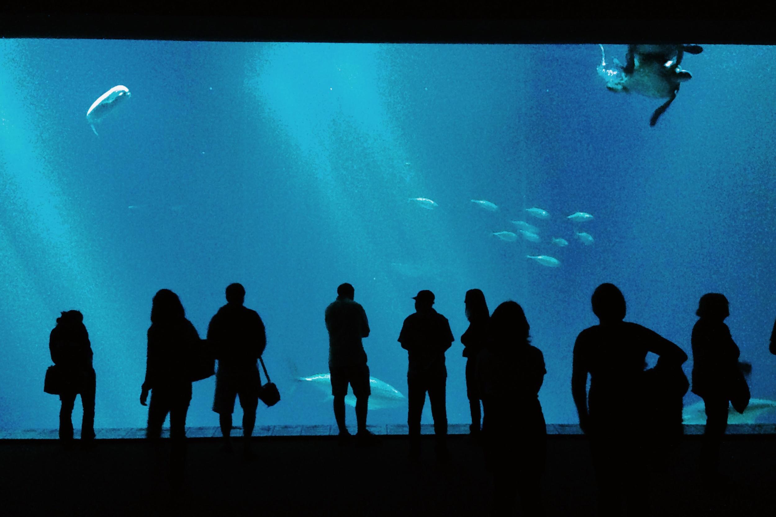 Open Sea at Monterey Bay Aquarium