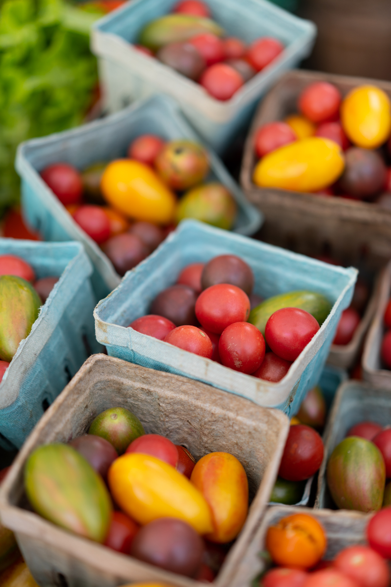 PFM_chickadee_tomatoes-1.jpg
