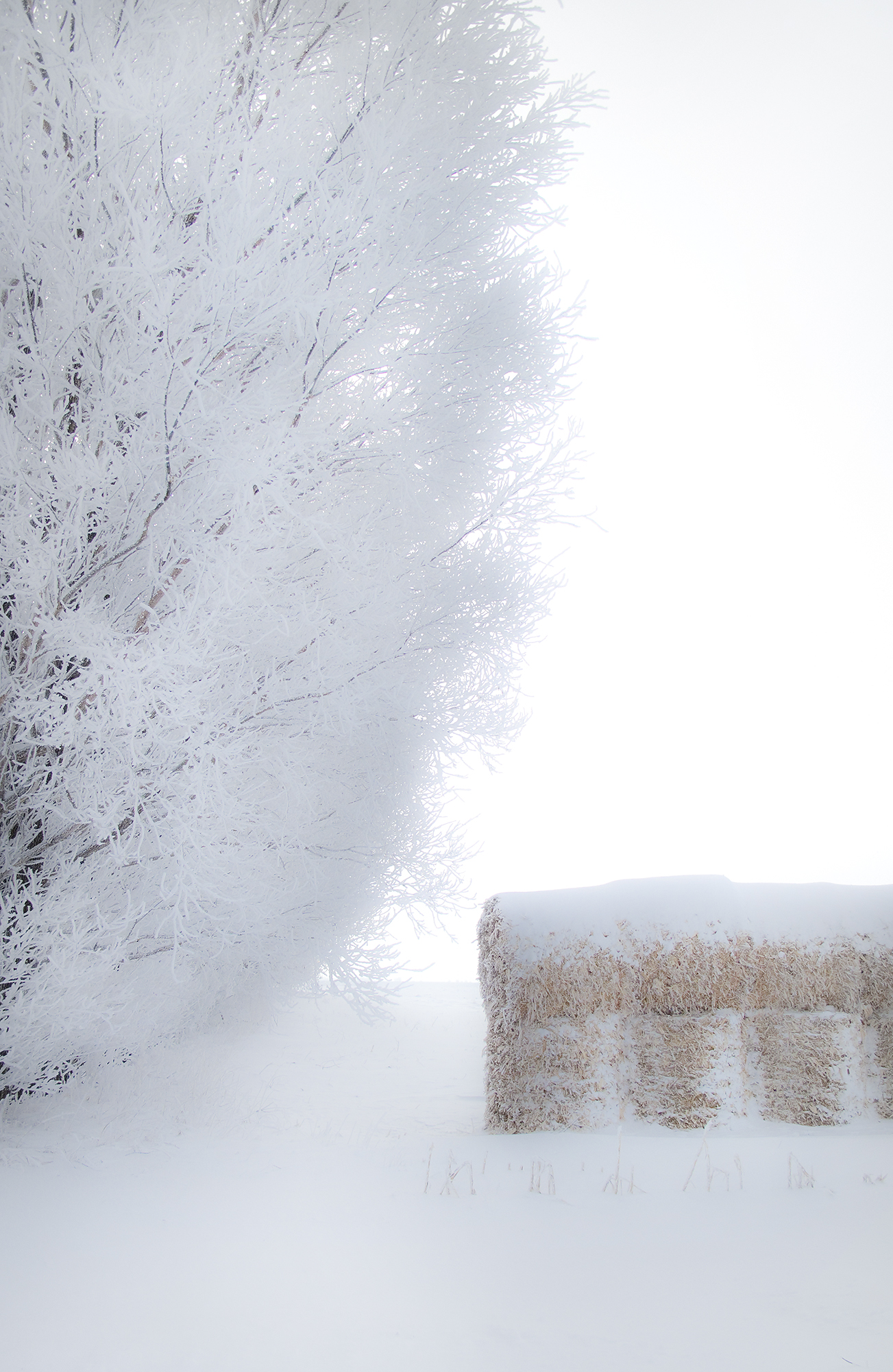 TreeStraw.jpg