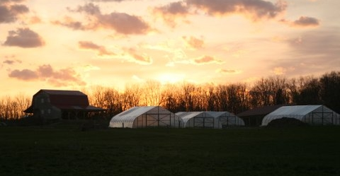 sunset over hoop houses, barn- EC.jpg