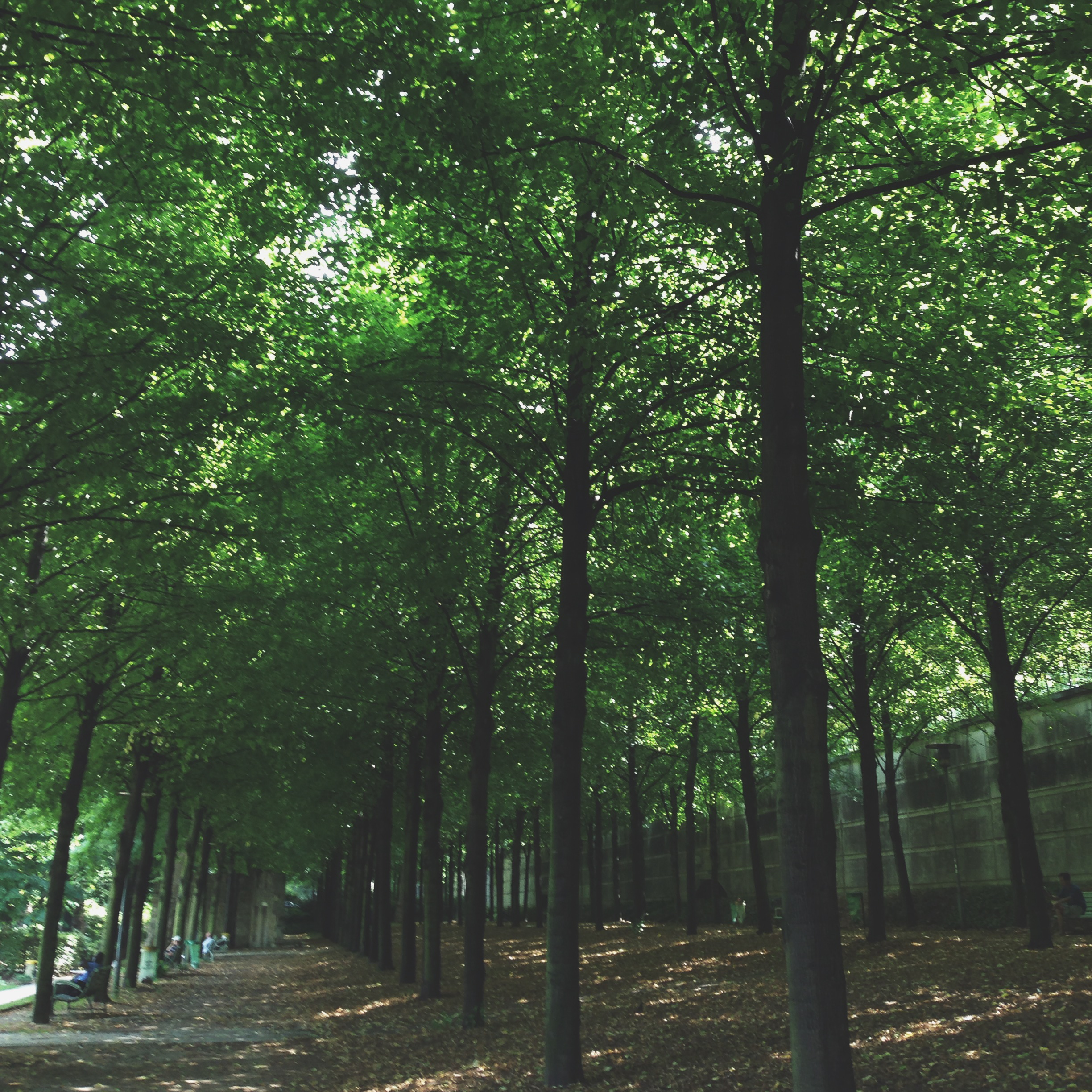 Actually looking for the shade in Parc de Bercy