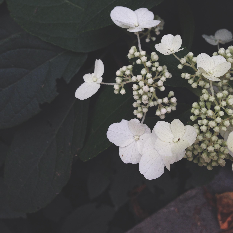 Beautiful summer flowers in Parc de Bercy