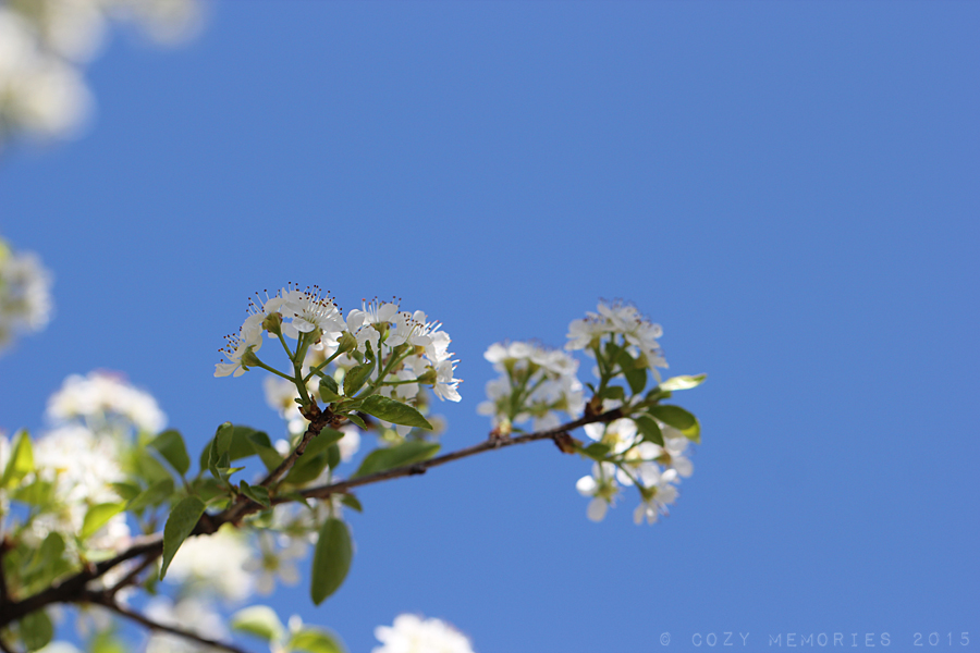 such a beautiful spring day with bright blue sky !