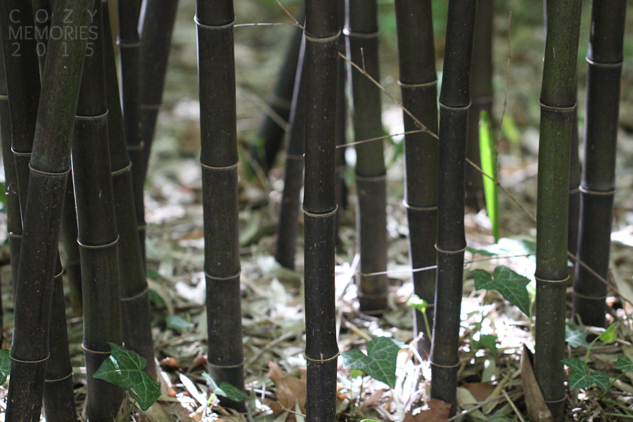 gorgeous black bamboos