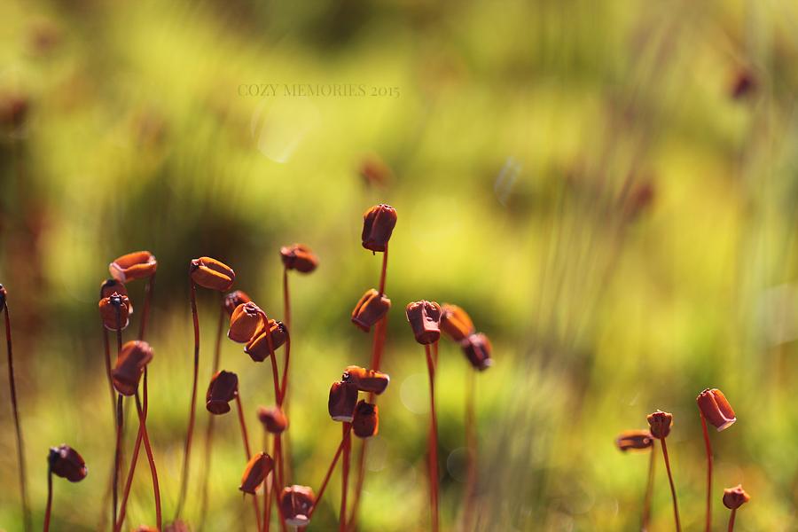 happy sporophytes !