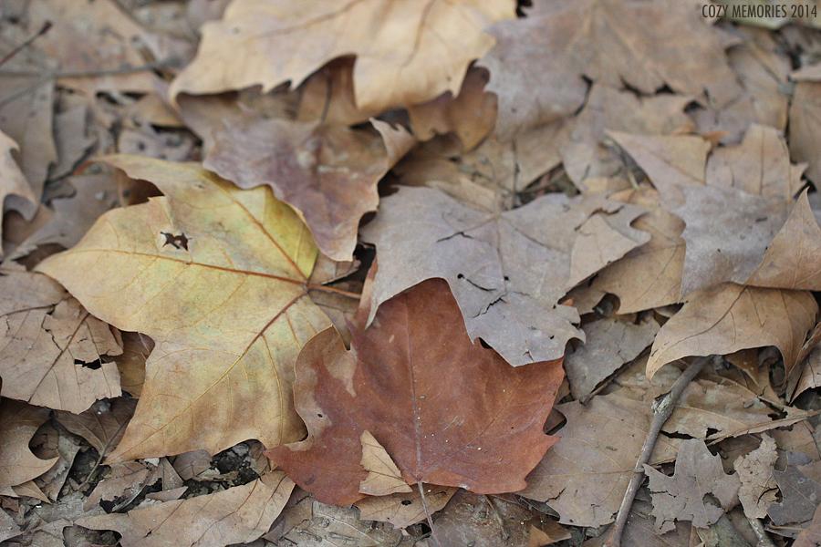 Autumnal color palette