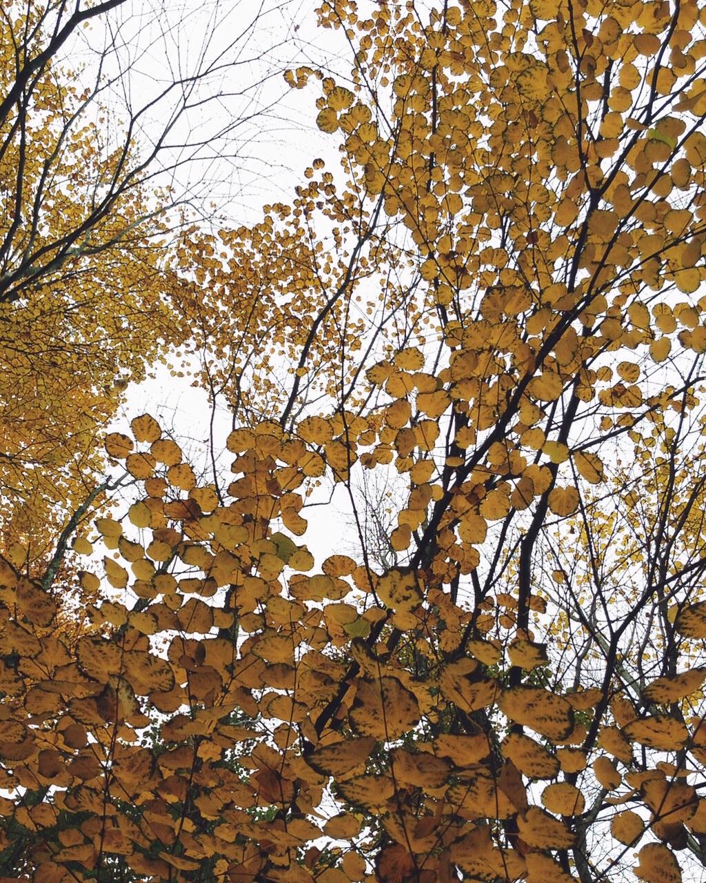 Autumn colors in Parc de Bercy