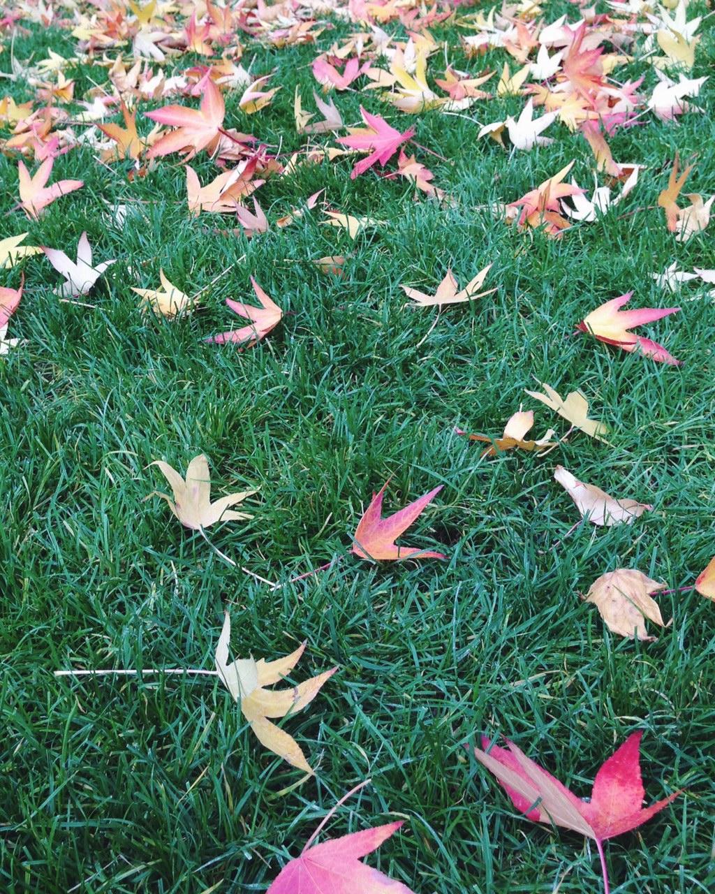 More autumn colors in Parc de Bercy