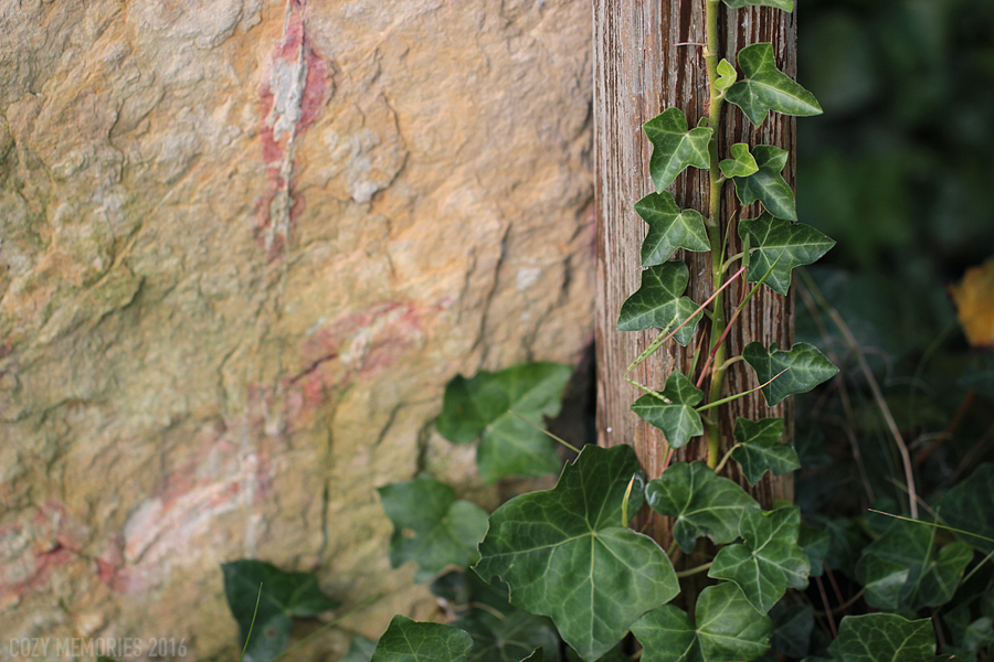 Ivy (too) happily growing around a little waterfall we have ...
