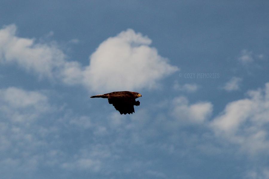 bird1b.jpg
