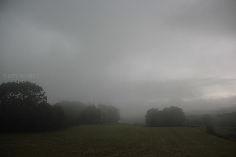 fog3.jpg
