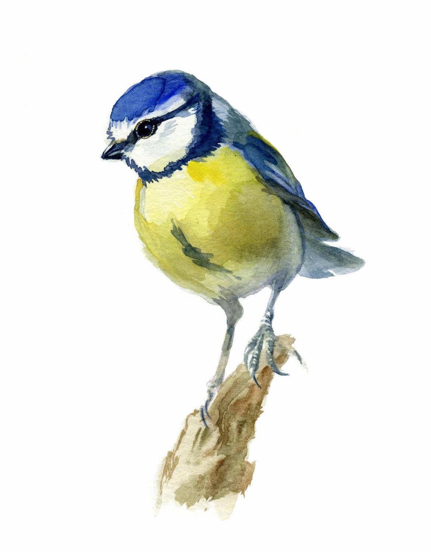 Verbrugge Watercolor