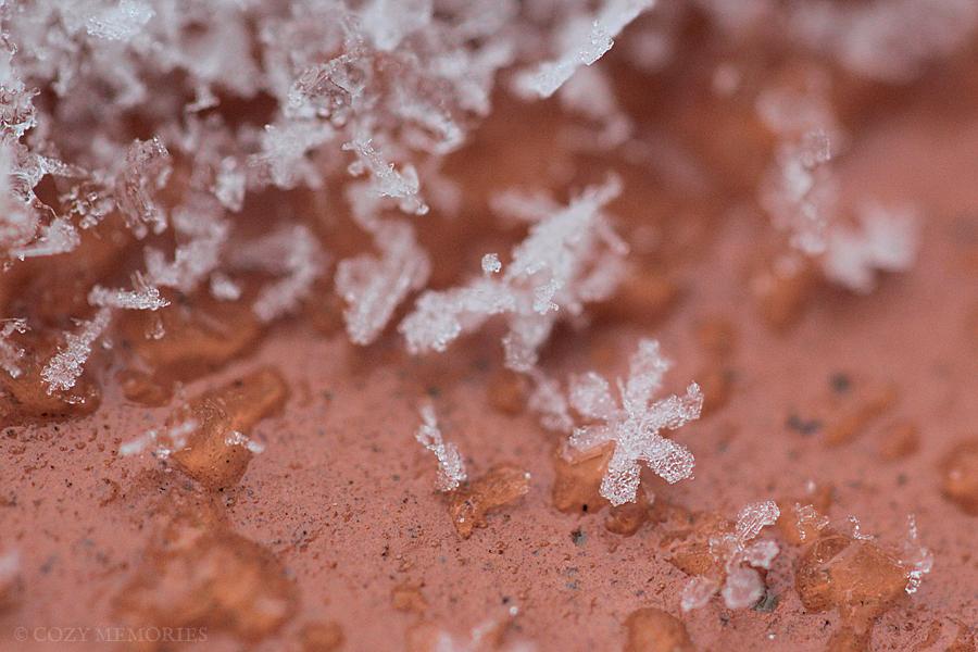 snow14.jpg