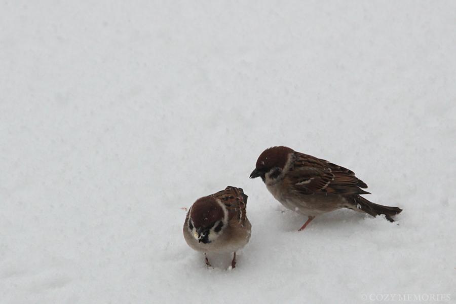 snow13.jpg