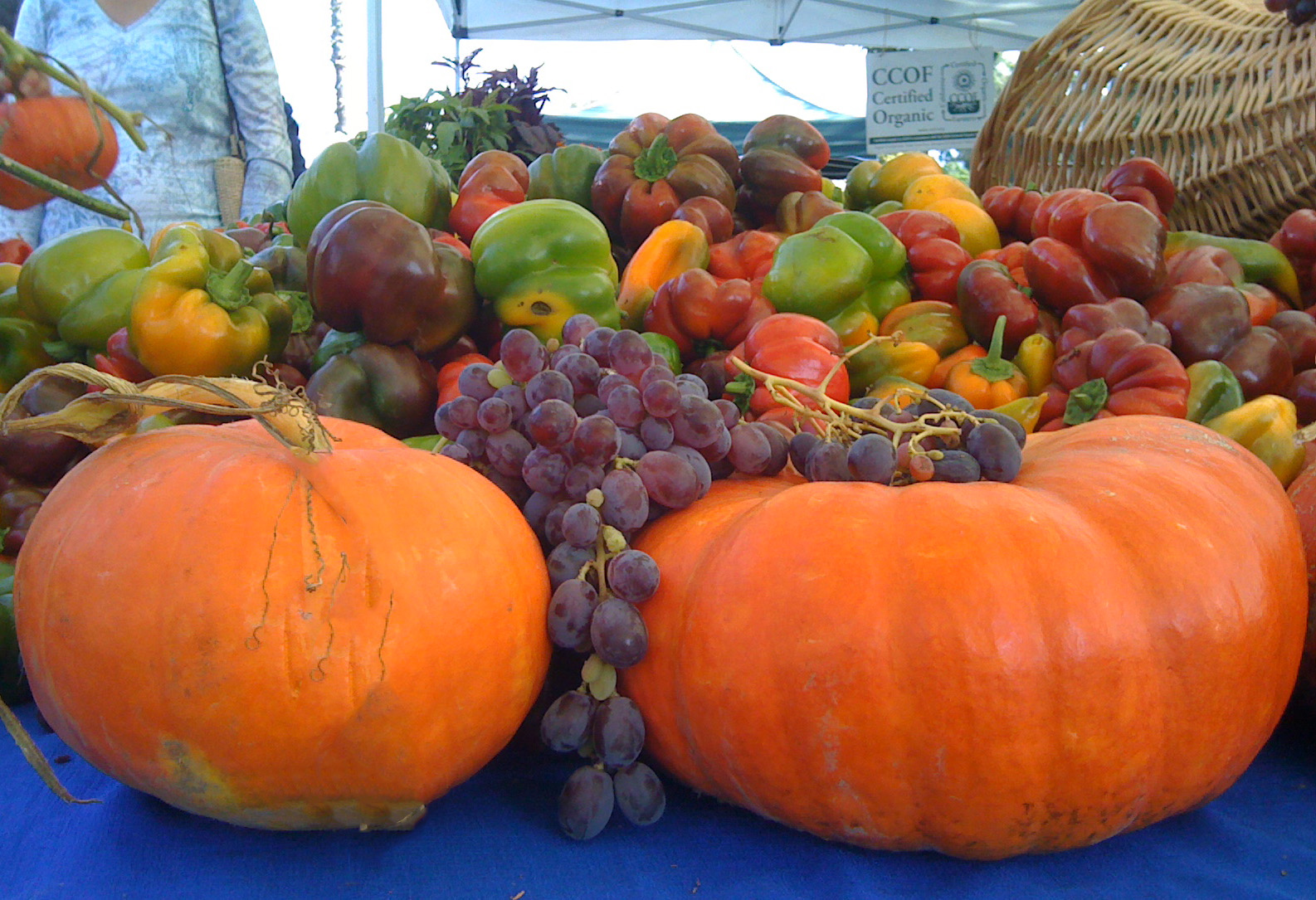 Autumn Farmers Market Santa Barbara