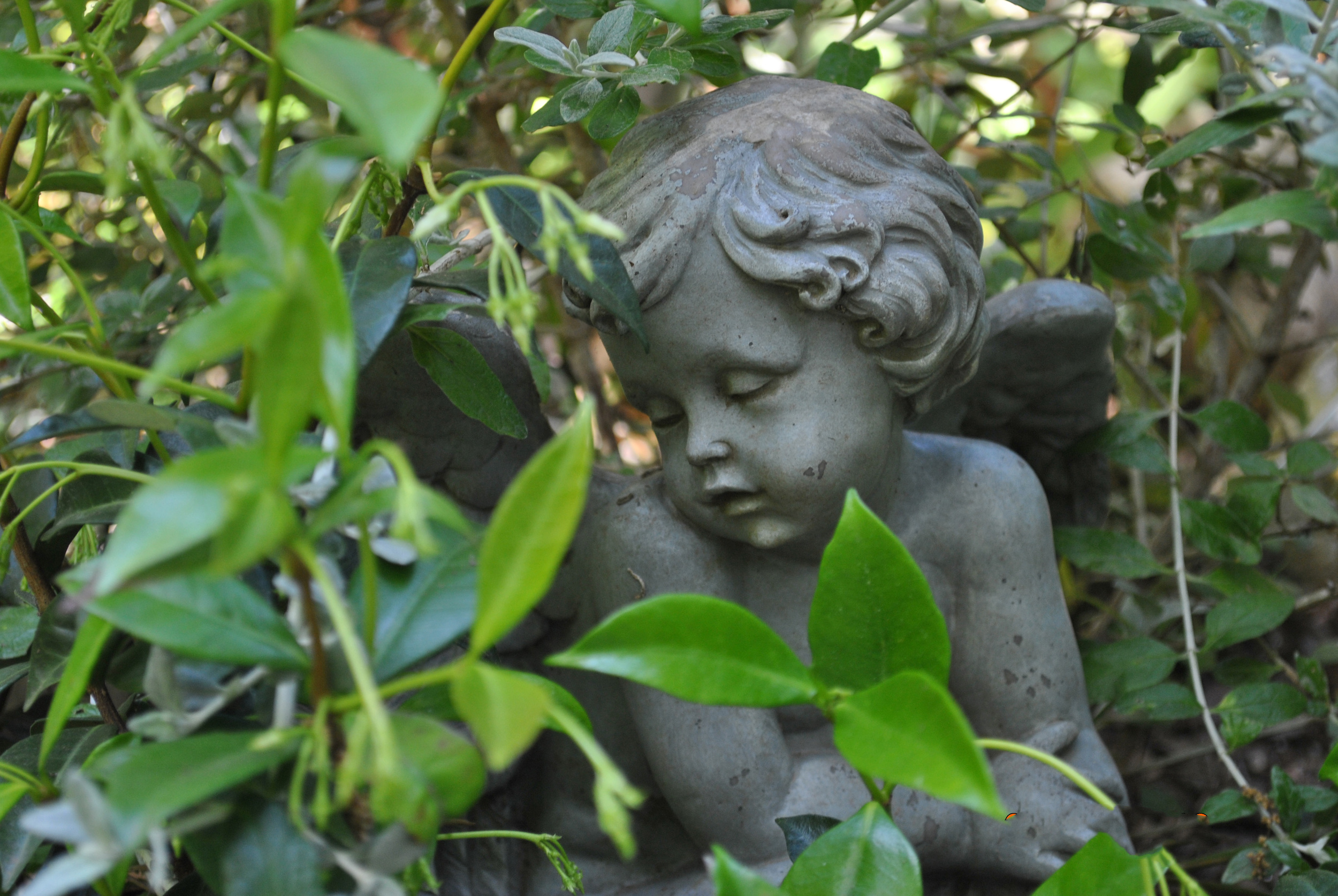 Garden Angel Statue Seated in Star Jasmine