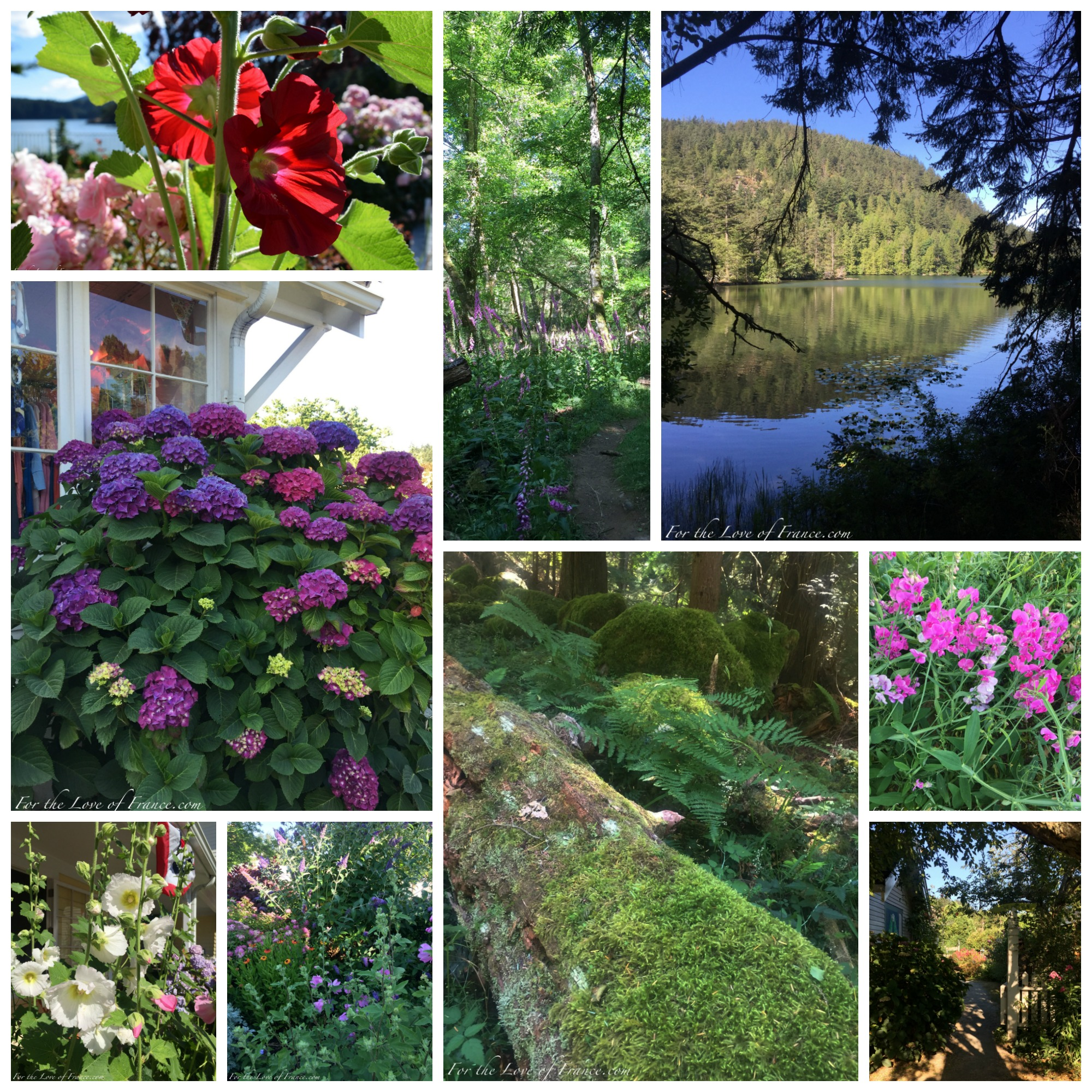 Flowers, Moran State Forest and Cascade Lake, Orcas Island WA