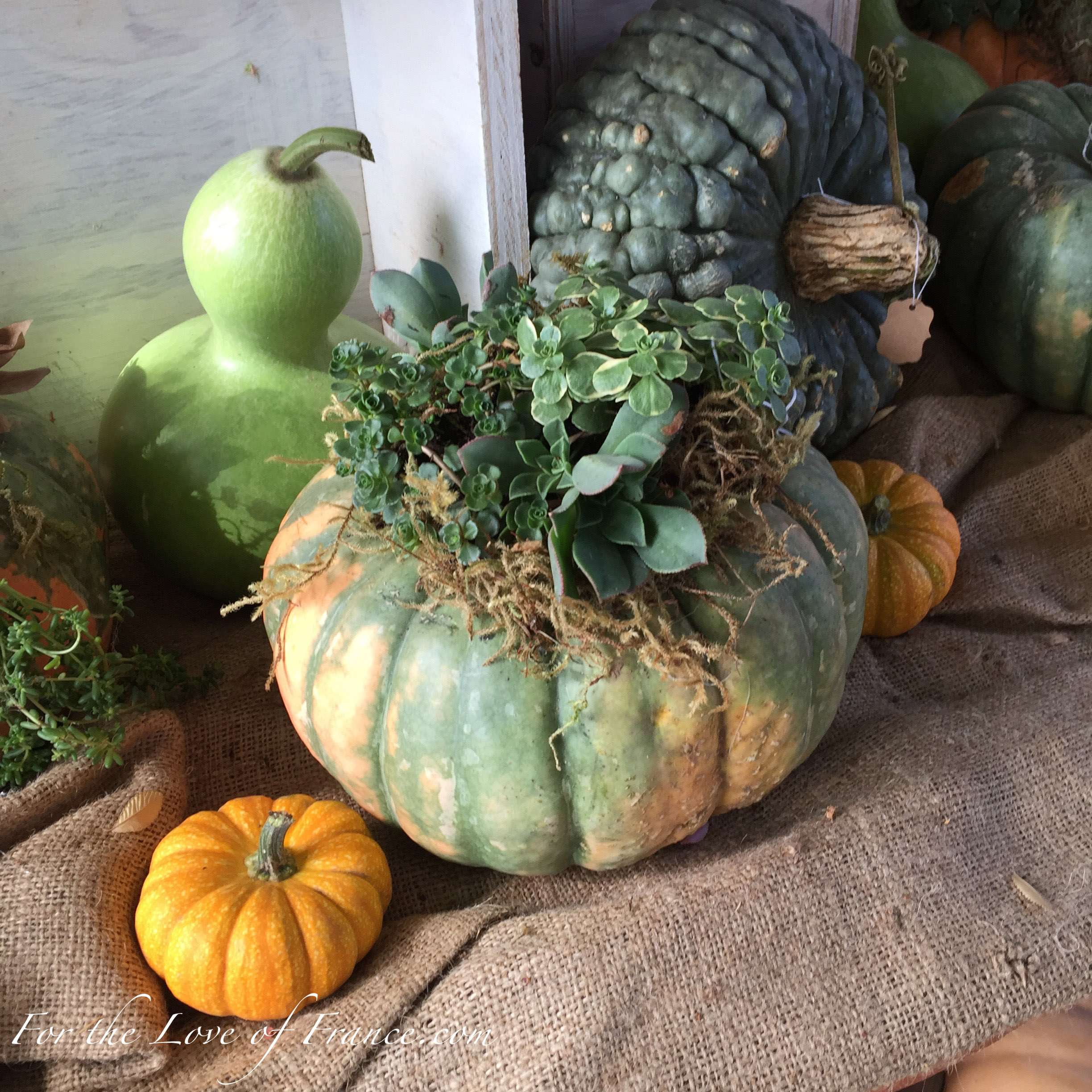 Green and ochre pumpkin planter, green gourds and tiny orange pumpkin