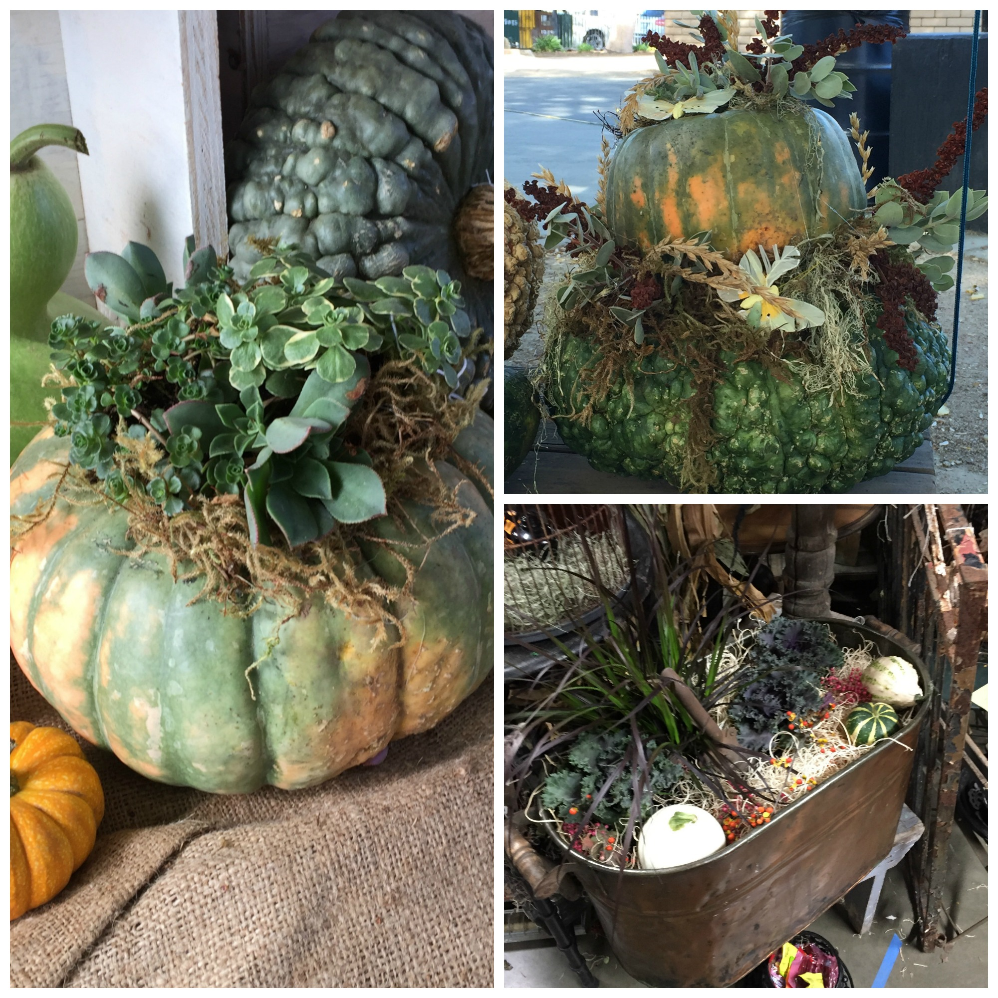 Pumpkin and succulent planters at the 3 speckled hens vintage show