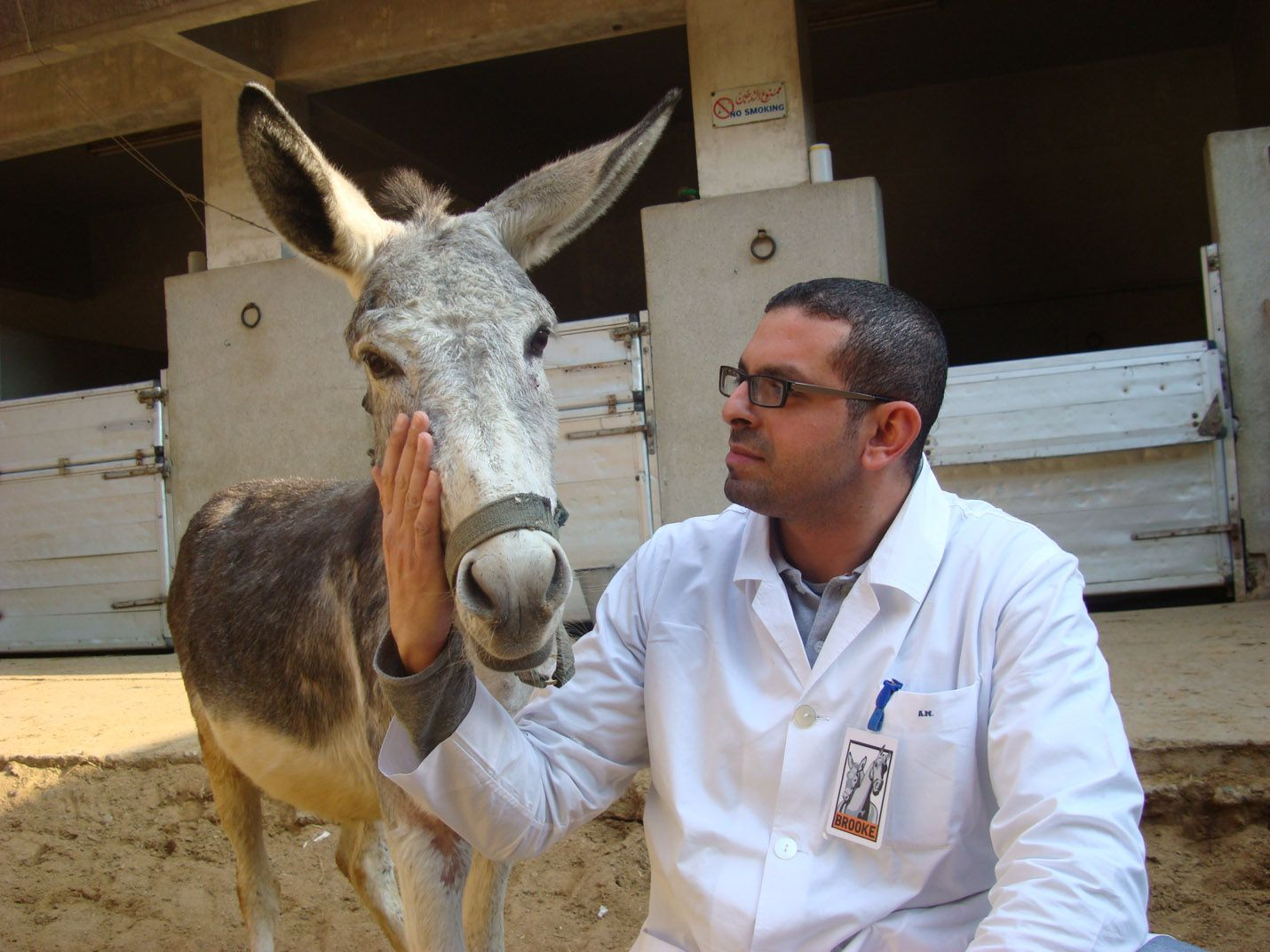 Veterinary Care in Egypt