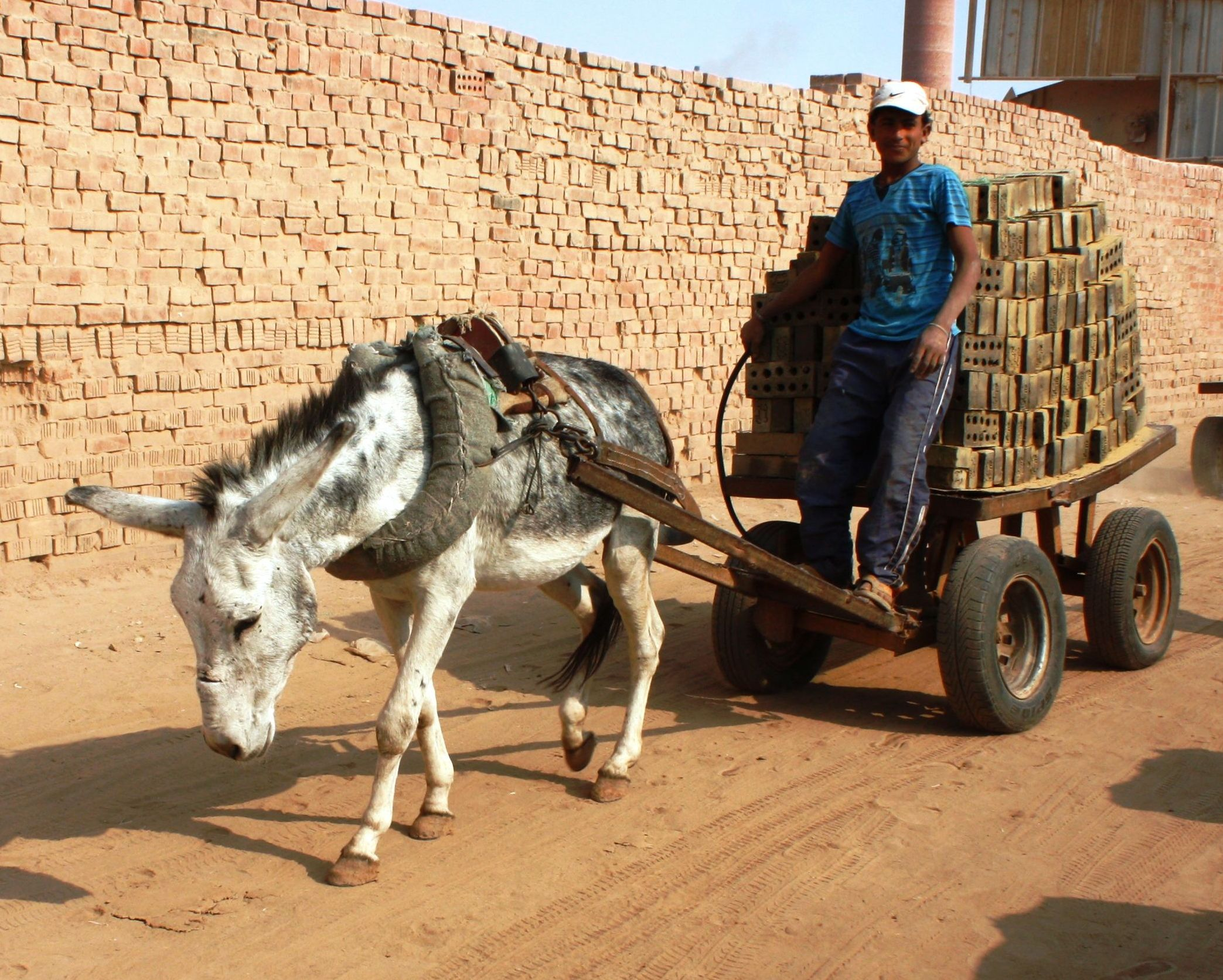 """Because horses, donkeys and mules labor so quietly, steadily, and efficiently, they are almost invisible to the rest of the world. So are their contributions and suffering."""
