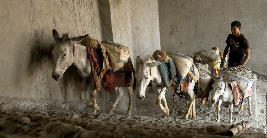 Construction Donkeys www.BrookeUSA.org.jpg