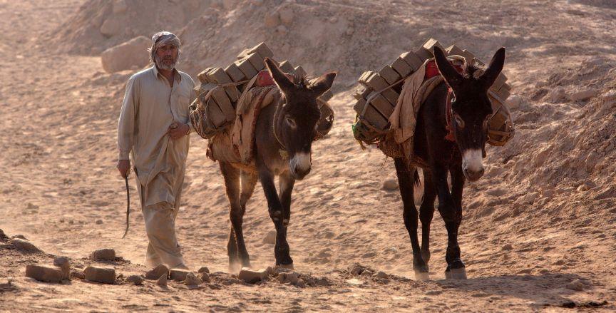 Mules working in a brick kiln in Peshawar, Pakistan. low res www.BrookeUSA.org.jpg