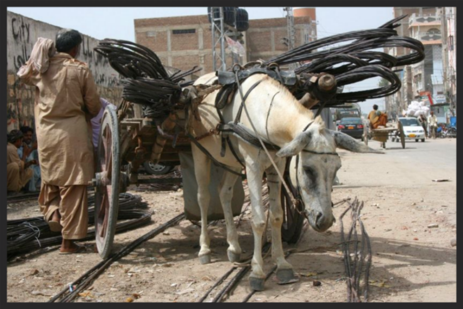 Without intervention from the Brooke,this overloaded, exhausted andhopelessanimal will get no relief as he labors in Pakistan's construction industry. Like most working equines, he willwork until he dies in harness.