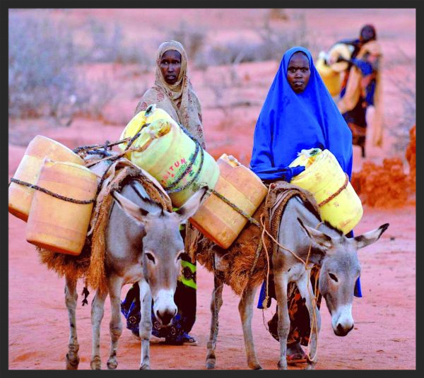 Women like these in Ethiopia are fortunate when they have donkeys to carry water from wells to their homes, which can often be several miles away. Without their animals, women would be forced to carry the water themselves.