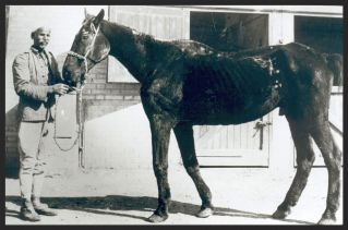 "One of the former war horses whom Dorothy rescued in 1931 and named ""Old Bill,"" left an indelible impression on her heart and memory. Old Bill became the mascot of all of her work and ultimately the means of saving all that remained in Egypt of his fellow war horses."