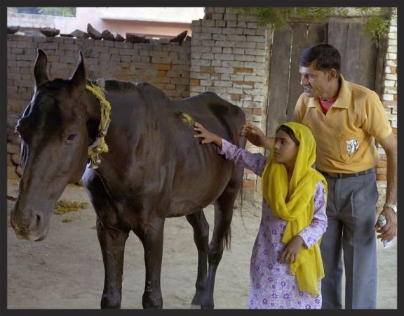 A Brooke veterinarian in India shows a little girl how to apply medicine to her family's horse's wound, and tells her how to prevent such wounds from recurring.