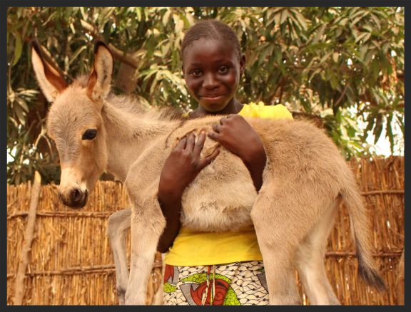A little girl with her donkey foal in Senegal, a country of one million working equines in Western Africa, where the Brooke has been working since 2010.