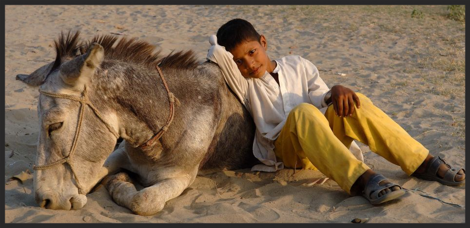 A boy waits in the hope that his overworked and exhausted donkey will be able to stand again.  Brooke's goal is to prevent scenarios like this, which are all to common in the developing world.  With the Brooke's intervention, this boy and his donkey could have a more promising future.