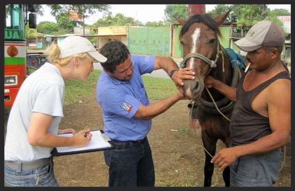 Ashleigh Brown, Welfare Advisor for the Brooke, conducts a welfare assessment on a horse in Nicaragua.