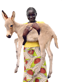 A Senegalese youth will learn how to properly care for her young donkey thanks to local Brooke veterinarians and donors worldwide.