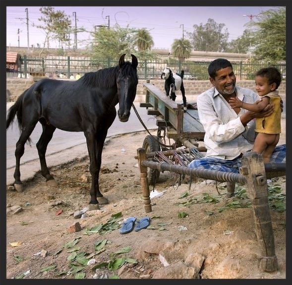 "This family in India is fortunate to have a horse to help them earn a living, but they pull his shoes too often to sell them (the shoes from a black horse are considered ""lucky"" in this part of India). Consequently his feet were in bad shape until the Brooke began working with them."