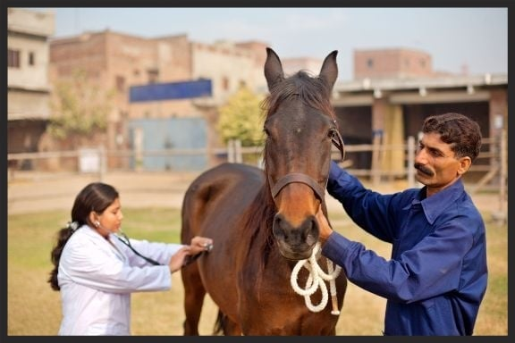 A Brooke veterinarian examines a working horse in Lahore, Pakistan