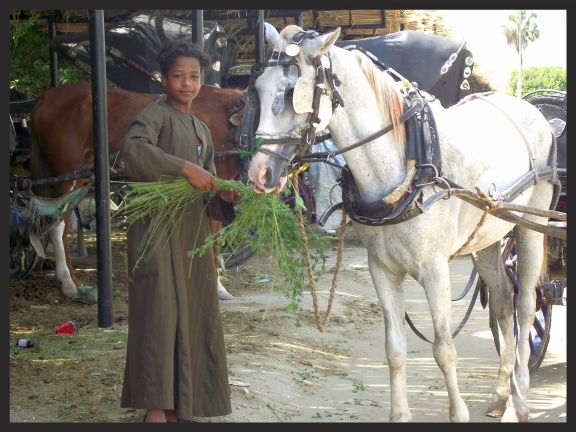 A boy who owns a taxi horse in the Middle East has learned the importance of bringing food and water with him on the route for his horse during the work day, thanks to Brooke donors.