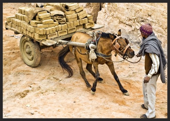 A horse working in a brick kiln struggles to move his overloaded cart