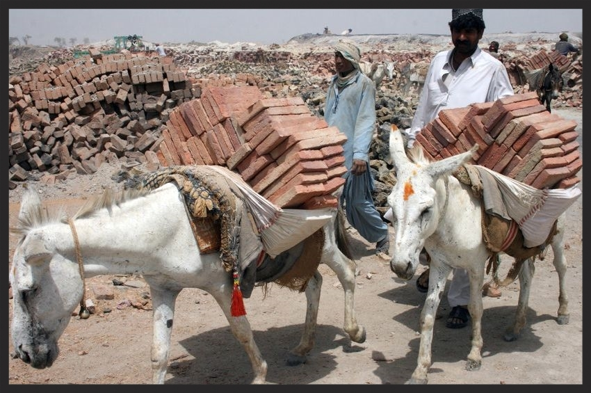 Exhausted donkeys working in the blazing sun of a brick kiln.