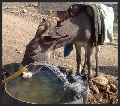 Thanks to the Brooke, this coal mine donkey gets to enjoy a refreshing drink before going back into the mine for another load.