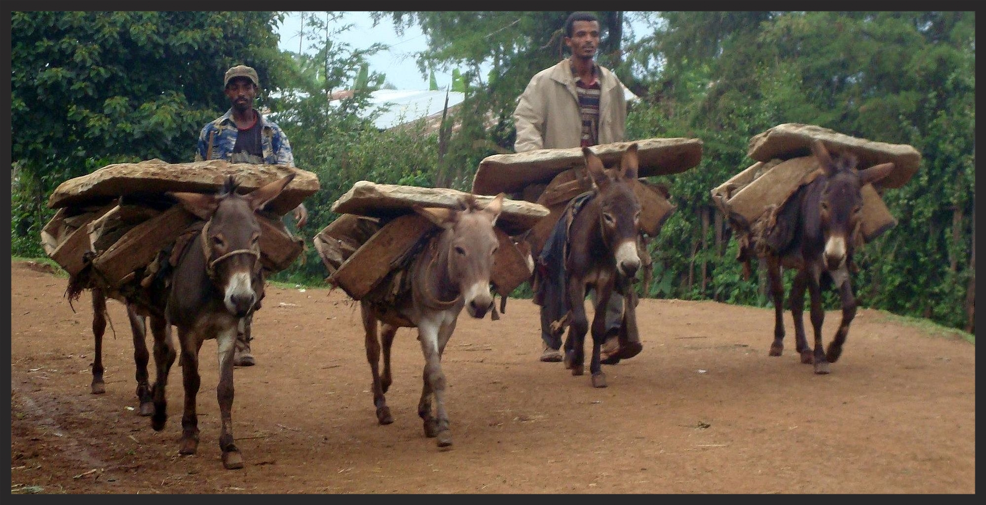 These donkeys, like thousands of others in Ethiopia, work in a quarry, carrying very heavy stones all day. Wouldn't access to a permanent water trough be appreciated!