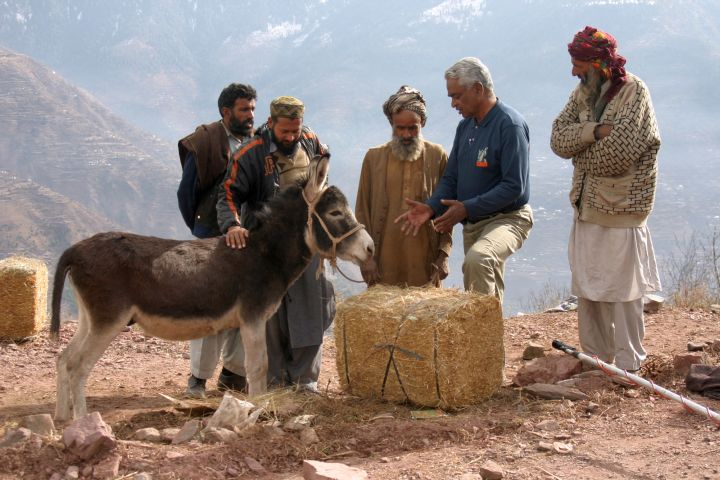 A devastating earthquake hit north west Pakistan, killing tens of thousands of people and millions of animals. Brooke treated thousands of animals - horses, donkeys and other livestock - and helped to rebuild lives by providing animal shelters and fodder. We also vaccinated against disease and dewormed. Here a Brooke vet is discussing proper feeding with a group of owners after the earthquake.