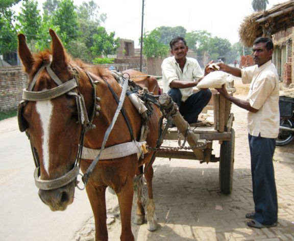 Desh Raj selling his new feed mix to an equine owner outside his shop.