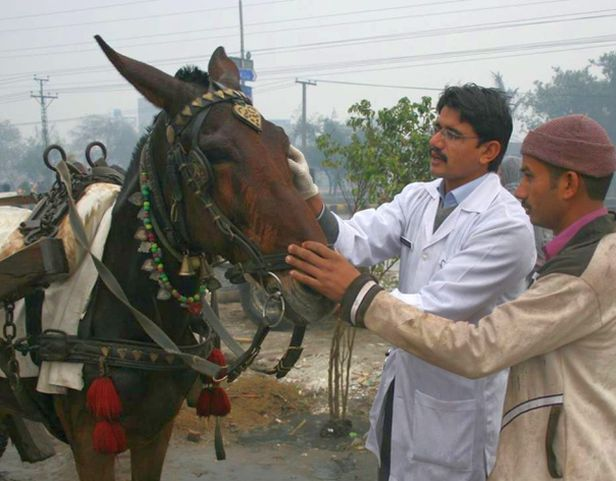 Mule and Brooke mobile vet in Pakistan www.BrookeUSA.org small.jpg