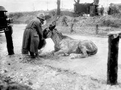 ww1 soldier giving exhausted mule food.jpg