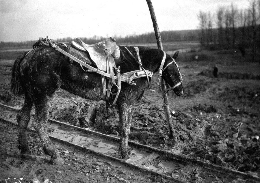 ww1 horse tethered to post after his equine partner was killed.jpg
