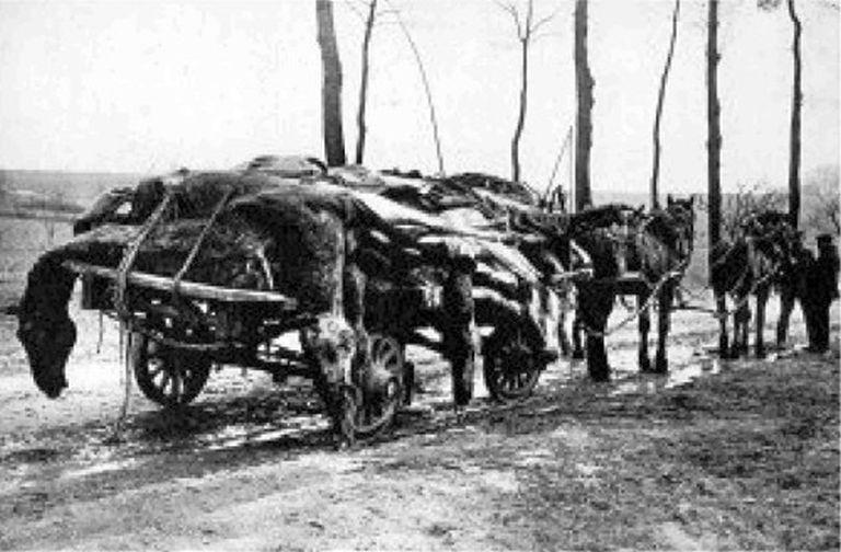 victimsignoredoise1917 1.jpg