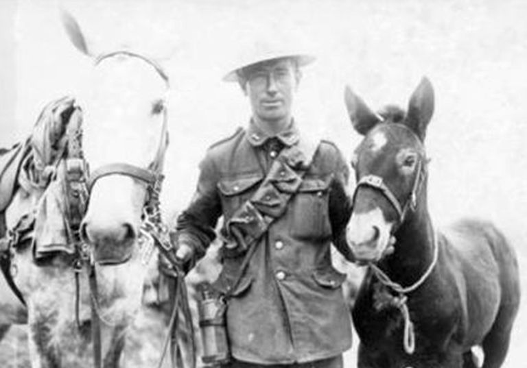 ww1 mare and foal.jpg